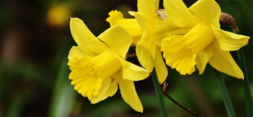 Spring Celebrations - The Focus Foundation