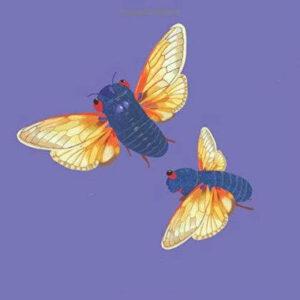 Cicada Invasion - The Focus Foundation